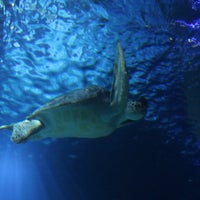 Sea Life Hannover Aquarium In Hannover