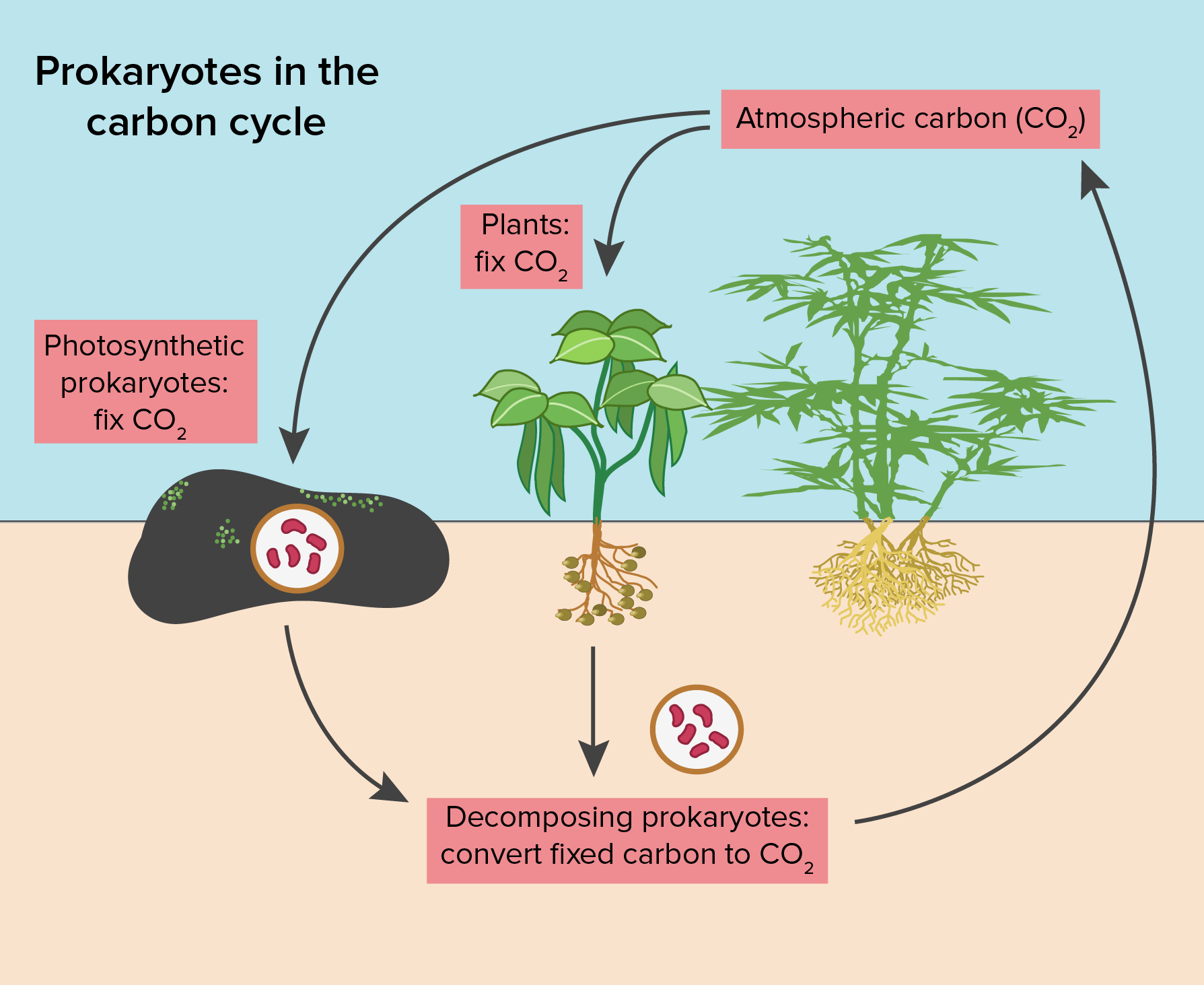 Chemoautotrophic Bacteria Obtain The Energy They Need From