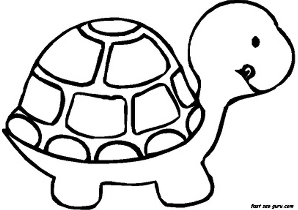 baby turtle book