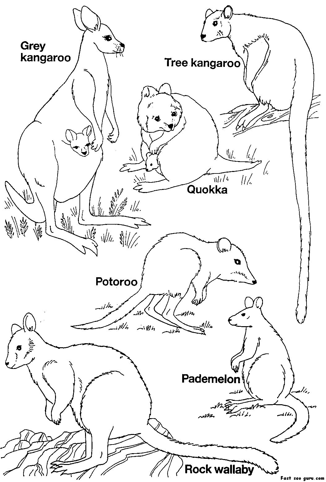 Printable Australian Animals coloring pages | free printable colouring pages australian animals