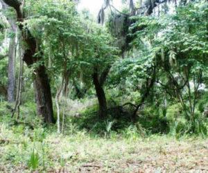 mound on big talbot island