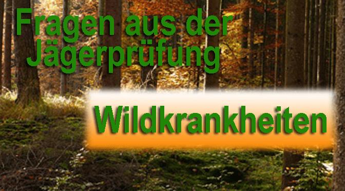 """Jagdprüfung """"Wildkrankheiten"""" – Testen Sie Ihr Wissen!"""