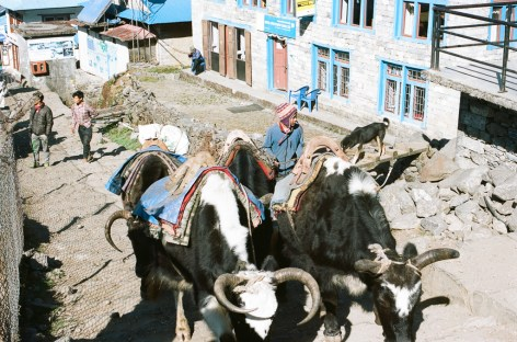 Our first Yak train