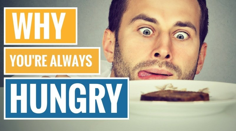 Why You Are Always Hungry