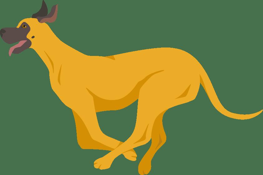 Great Dane running