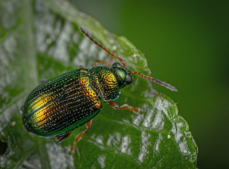 close up photography of green and black insect