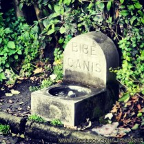 Dog water dish in a park in Napoli