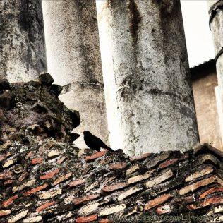 Bird on Temple of Saturn in Roman Forum