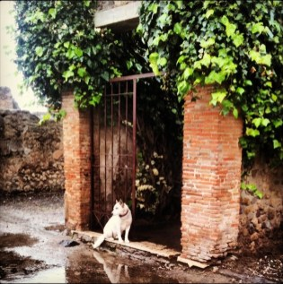 Dogs of Pompeii