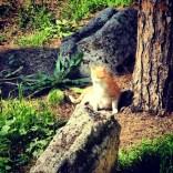 Cats of Largo Argentina - Rome