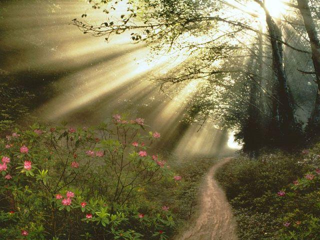 bright light path