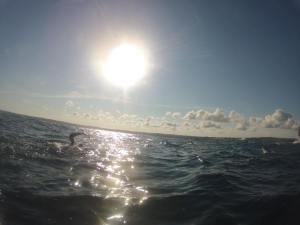 swim in