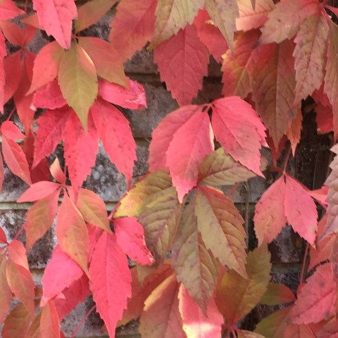 Leaves changing colour
