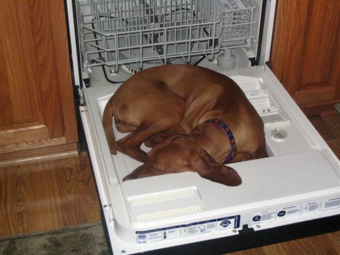 sleepdog14-cCR6