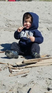 Keoni eating driftwood on the beach