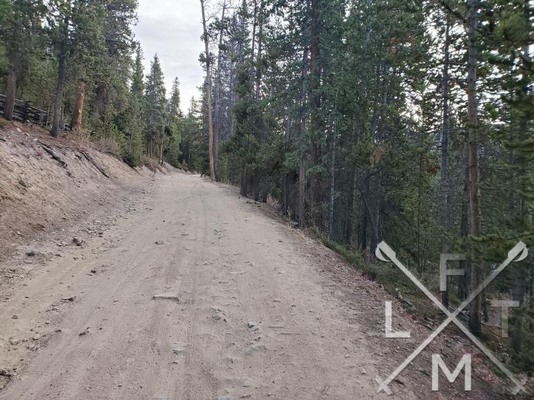 The single lane dirt road with large pine trees on either side.