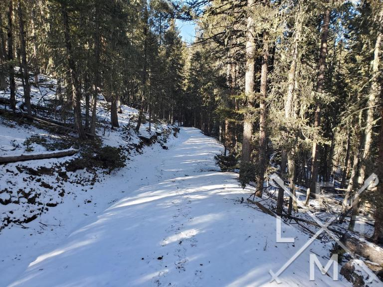 The snow covered trail within the forest section of the 18 trail