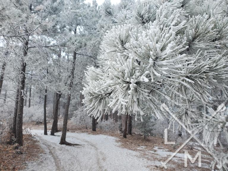 A frosted tree heading up to the Spruce Mountain trail.