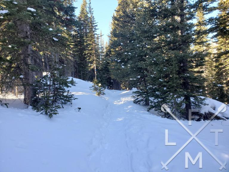 The beginning of the Long Lake Trail  in the snow with pine trees surrounding it.  This is part of the Brainard Long Lake Loop (winter)
