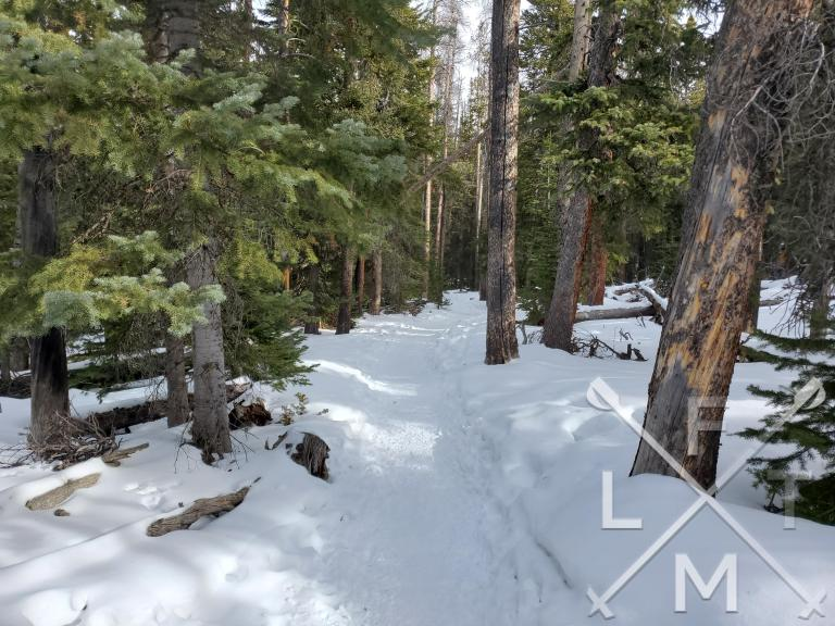 The trail to Bierstadt Lake completely covered in snow and surrounded by large pine trees.  The green needles of the pines contrasting against the white snow.