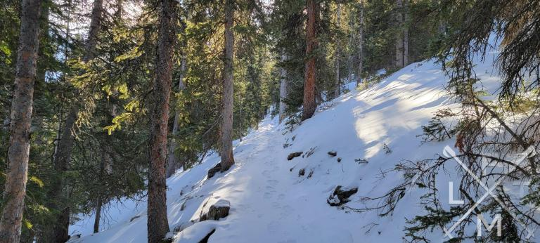 The narrow trail of the Chief Mountain trail running between a forest of pine trees.