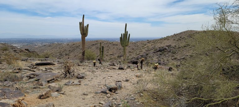 Tall Saguaro Cactus lining the dirt trail on the Mormon Loop to National Loop Trail.