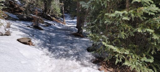 The Frozen Mud Stage of the Hiking seasons depicted with a frozen muddy trail through the forest.