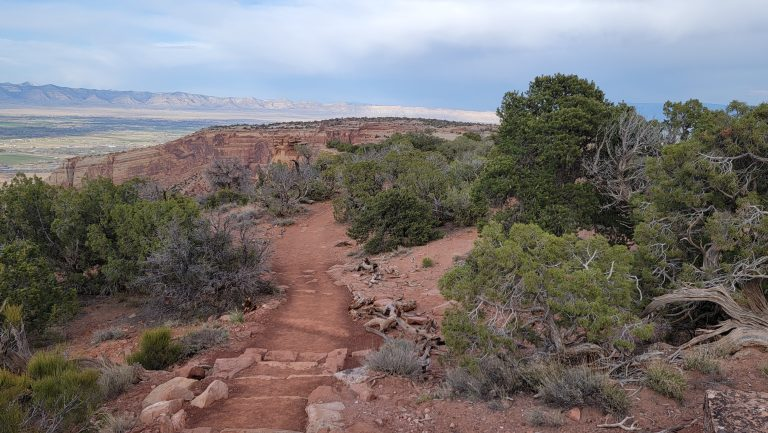 Part of the path to the viewing area of Otto's trail.  There is small rock staircase among a bunch of small trees and a dirt path.
