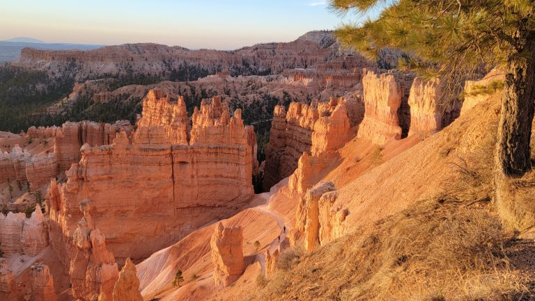 The Hoodoo's glowing during sunrise at Bryce Canyon.  They have taken on an orange tint in the towering rocks.