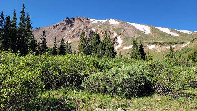 Small green bushes in the foreground with a scattering of pine trees and then a rocky peak with snow on one side at the first clearing of the Ruby Gulch trail.  The mountains still having snow in July is a staple of Colorado Hiking.
