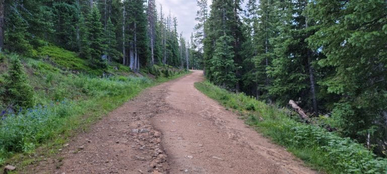 The service road surrounded by tall Evergreen trees on the way to the Mount Flora Trail.