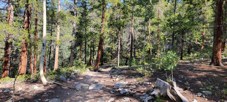 Some of the denser forest on the Kroenke Lake trail.  The trees provide a lot of shade but block a lot of sun at the same time.