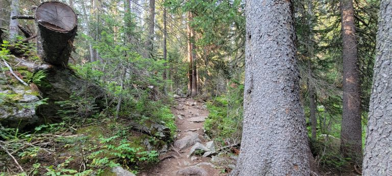 The trail to Rogers Pass Lake gest narrow through the forest but it is still well maintained with felled trees cut and removed from the trail.