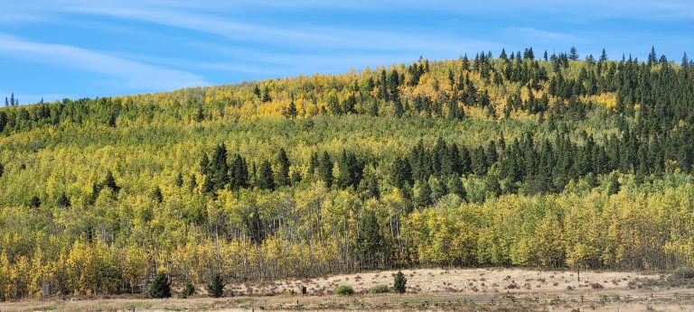 A hill with a mixture of green and yellow leaves as part of the fall colors of Colorado at Kenosha Pass