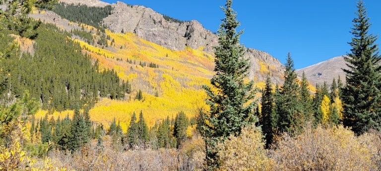 The entire hillside is glowing yellow and gold on the Abyss trial to Helms Lake. A staple Colorado Fall hike.