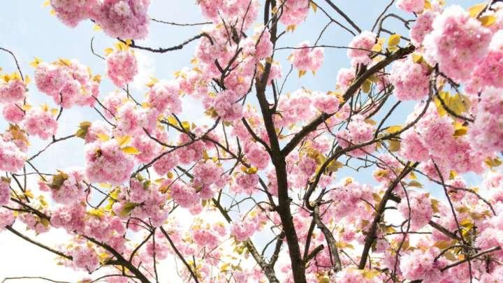 Un albero ogni nuovo nato: leggi e diritti dimenticati