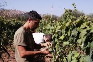 Arcangelo Galuppi vino naturale Sete