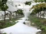 grandine Cisterna Aprilia