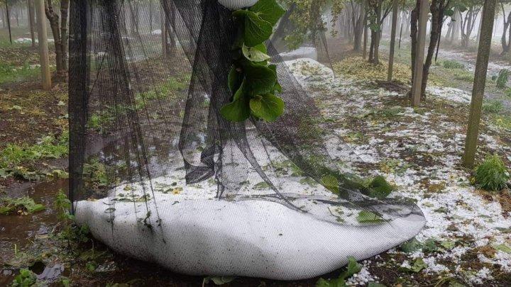 Grandine da Campoverde a Norma: agricoltura in ginocchio