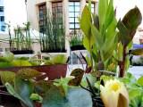 Plants-&-food-Latina