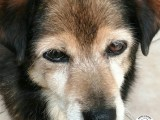 canile-latina-amici-del-cane