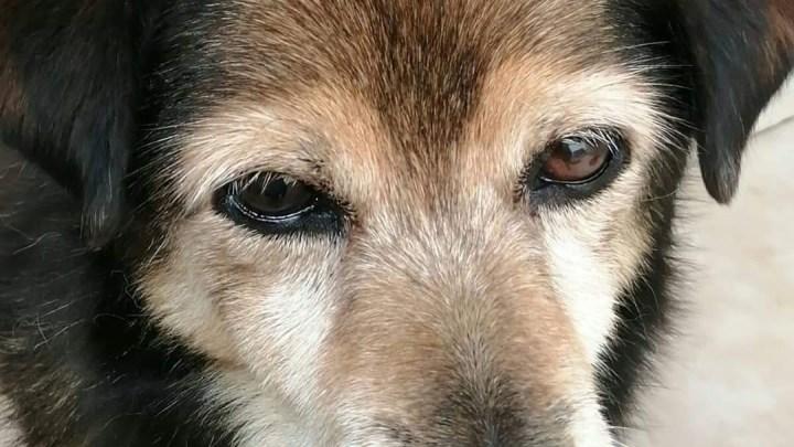 Latina, il canile rimane agli Amici del Cane di Latina