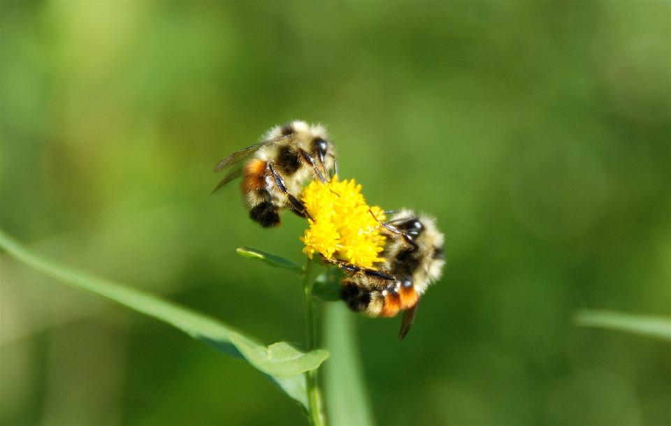 Allarme api al Parco Riviera di Ulisse