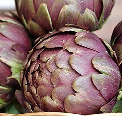 Sezze ferita e la lezione del carciofo nel pericolo dell'avocado