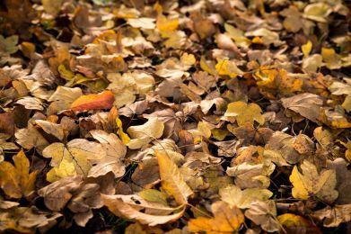 Couleur d'automne à Meise 057-9