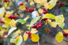 Couleur d'automne à Meise 078-12
