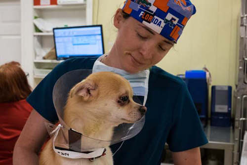 Dr. Croy with Chihuahua - Faulkville Animal Hospital - Bloomingdale and Pooler, GA