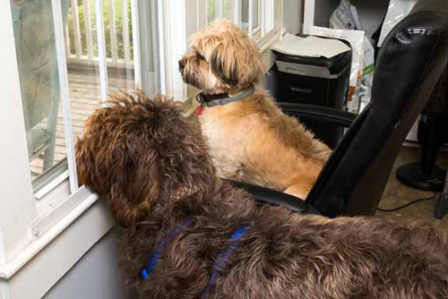 Moose and Penny looking out a window - Faulkville Animal Hospital - Bloomingdale and Pooler, GA