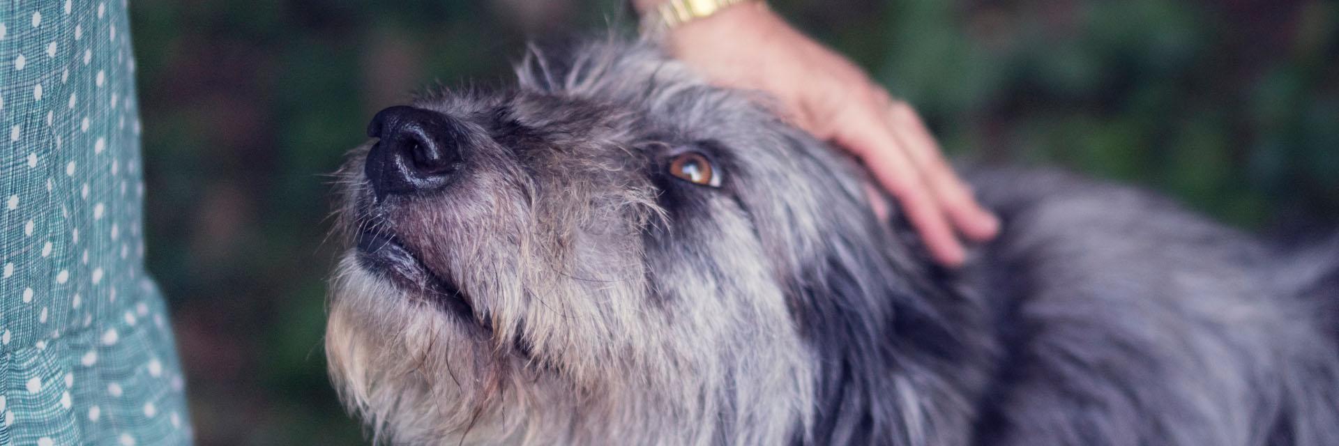 Older Dog with Companion - Faulkville Animal Hospital - Bloomingdale, GA