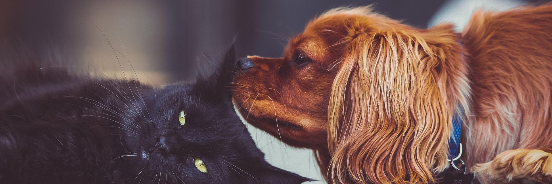 Dog Sniffing a Cat - Faulkville Animal Hospital - Bloomingdale, GA